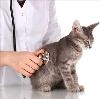 Ветеринарные клиники в Порхове